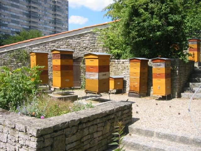Abeilles sur sa ne distance de s curit entre ruches et for Abeilles dans la maison