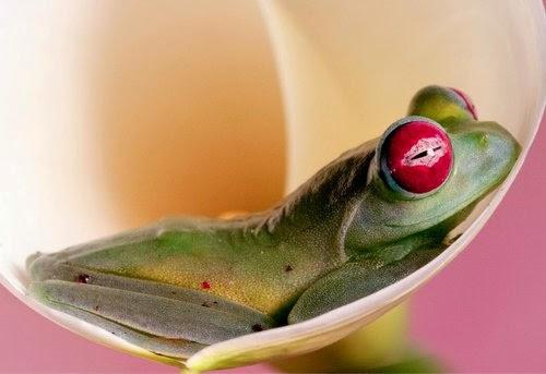 17-Wil-Mijer-Frog-Macro-Photography-www-designstack-co