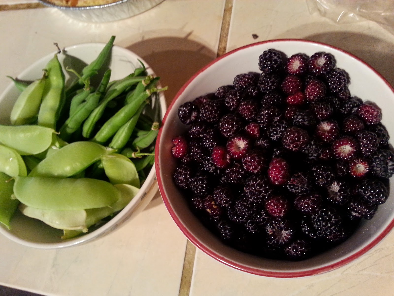 Garden update with our #Harvest
