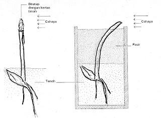 Gambar 5. Percobaan Darwin dan putranya