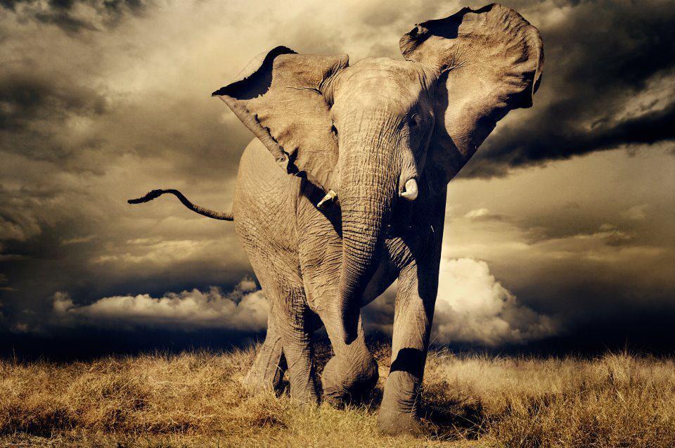 Reducción de elefantes