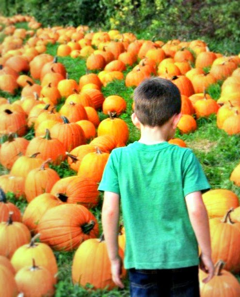 Pumpkin Patch Boy - New England Fall Events