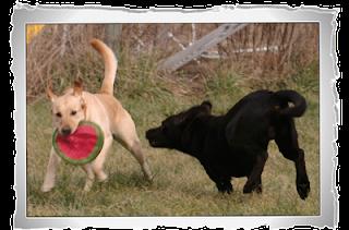 Saiba como manter o seu cachorro saudável e forte através de algumas dicas que lhe fornecemos