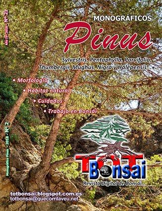 DR TOT Bonsai Nº 21