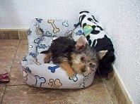 Nuestra Clhoé,la mascota del blog