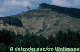NO Forestales en Wallmapu