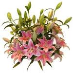 O floare pentru voi....