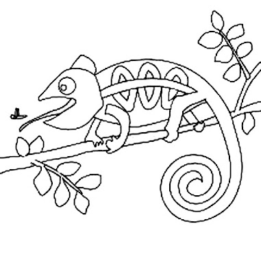Chameleon Coloring Pages To Printable Chameleon Coloring Pages Printable