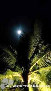 full moon hammock