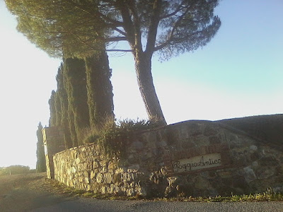 Cypress and pine trees on the road to Poggio Antico winery, Montalcino