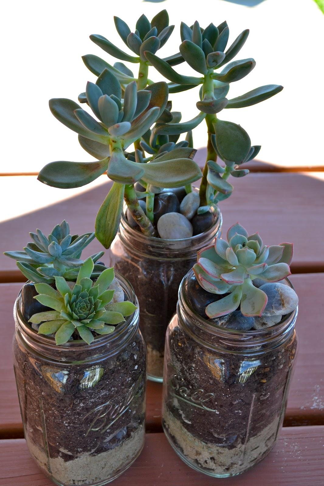 The domestic doozie mason jar succulent planters Planters for succulents