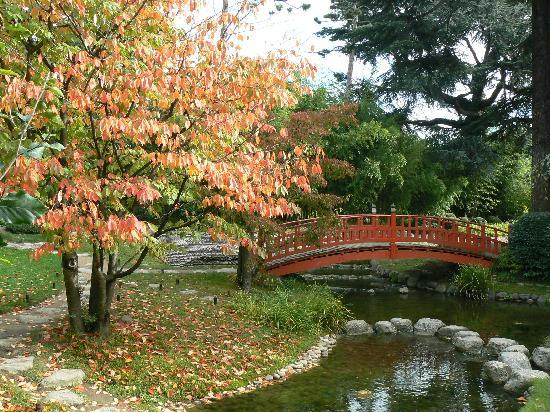 Sakura el jard n japon s - Plantas para jardin zen ...
