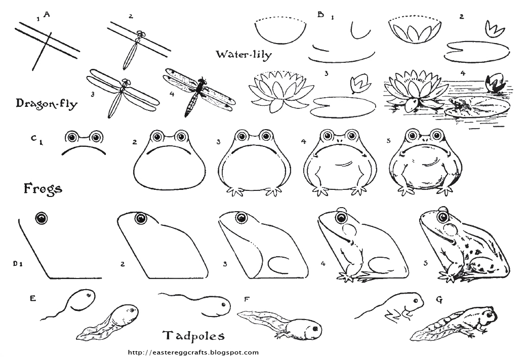 Frogs Toads And Pollywogs For Spring