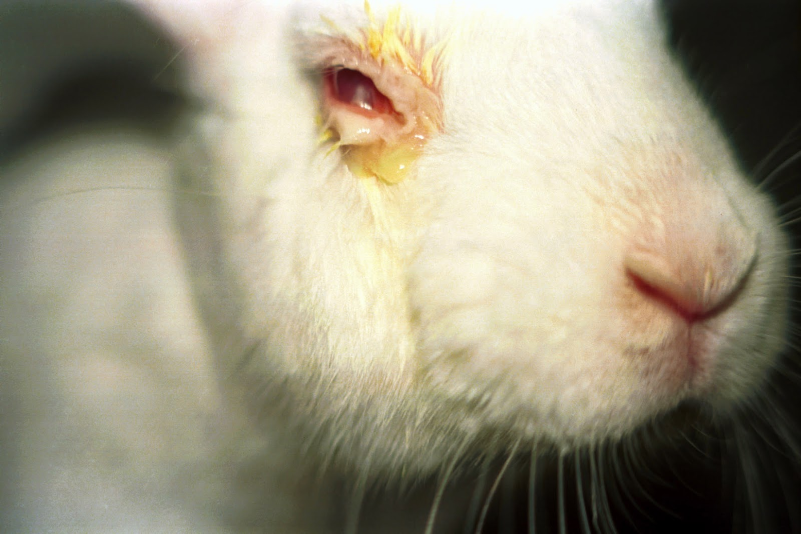 is animal experimentation justified
