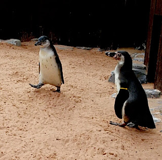 Penguins at Sea Life