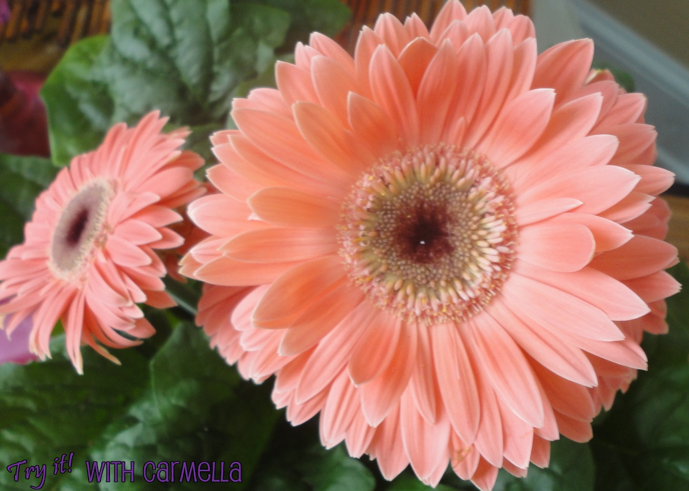 Try It With Carmella Peach Flowers