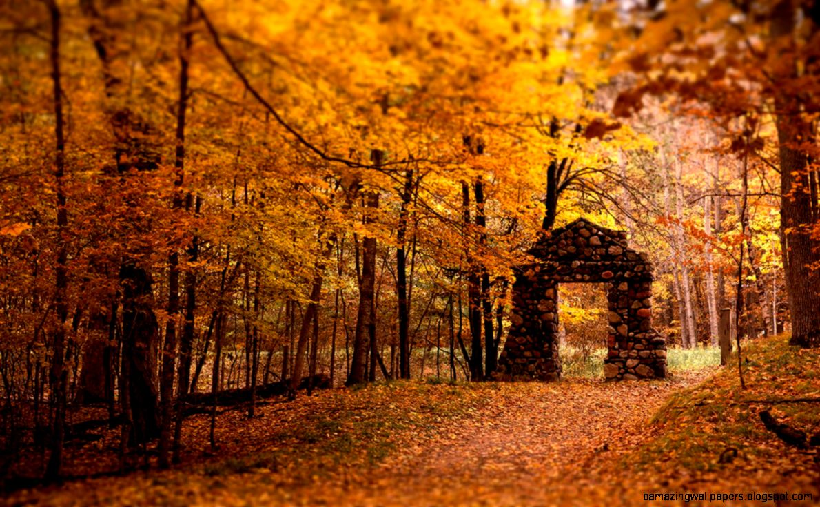 Blurred autumn beautiful photography wallpaper 5 - Landscape