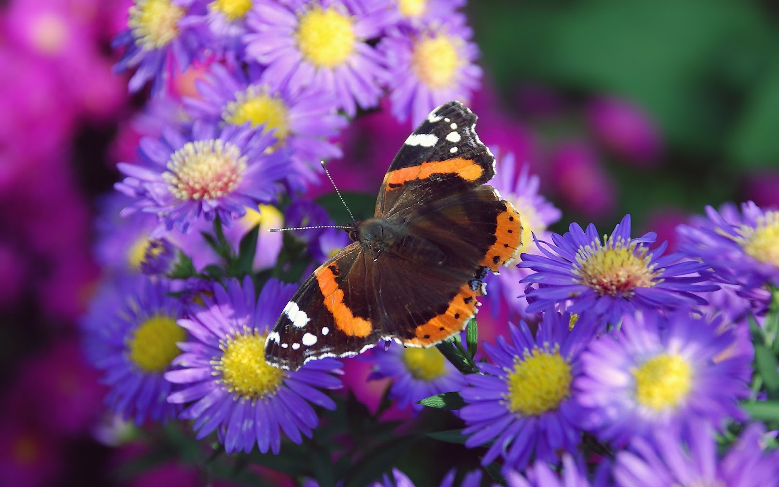 28 flowers with butterflies what flowers do butterflies
