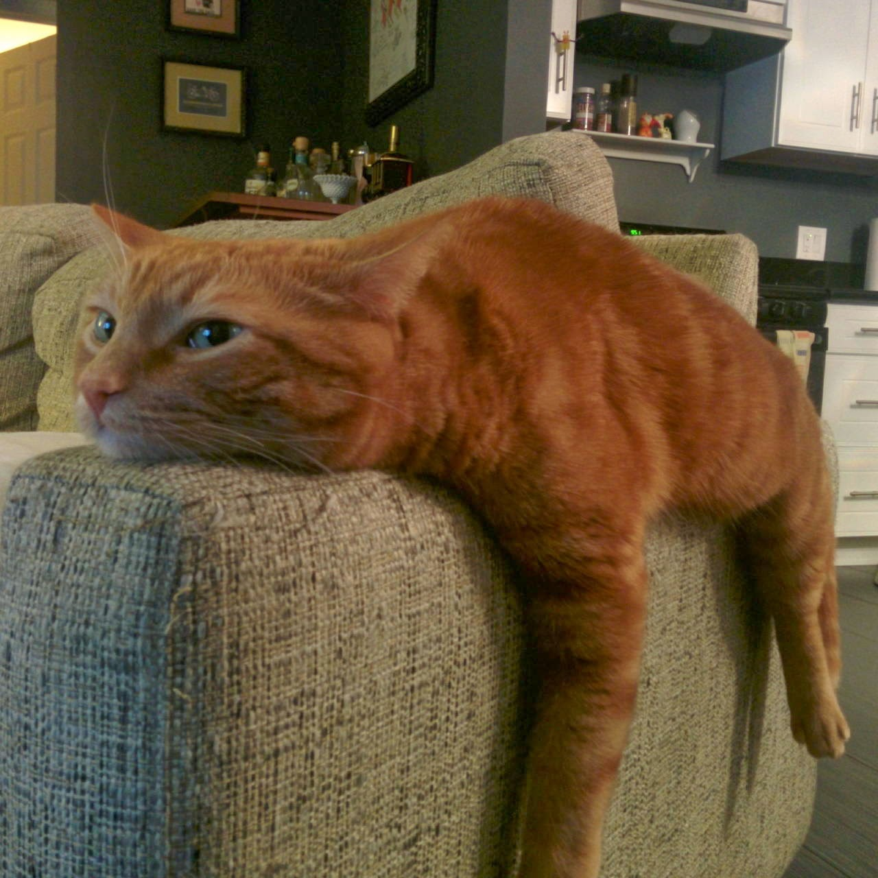Funny cats - part 94 (40 pics + 10 gifs), cat pictures, cat lays on couch