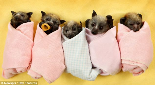 bats out of hell the super cute little orphans that have survived on