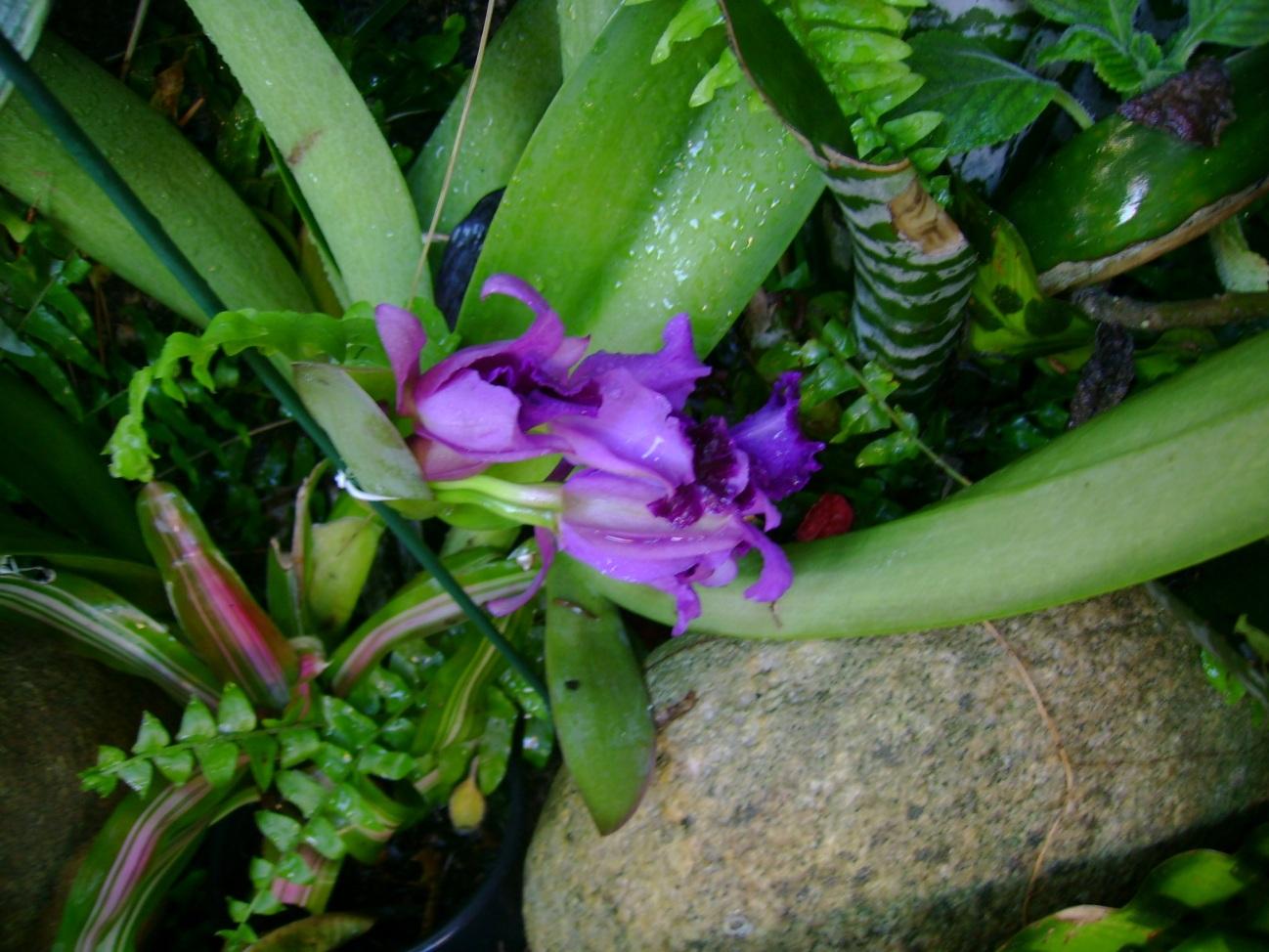 flores jardim do mar:Neumar Monteiro: AS FLORES DO JARDIM DA MINHA CASA