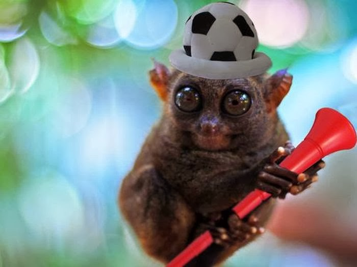 Cute Funny Animalz Funny Tarsier New Nice Photos And