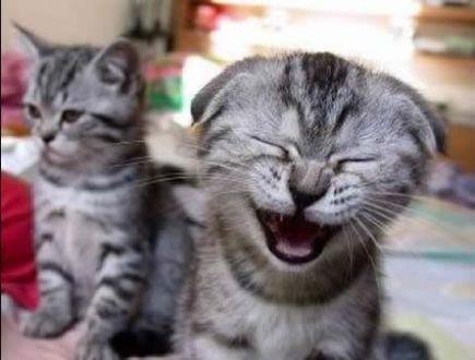 Rir até cair!