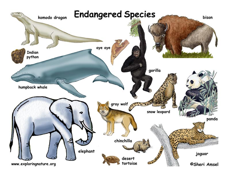 the controversy on preservation of endangered species The endangered species act (esa) of 1973 requires the preservation of species that are of aesthetic, ecological, educational, historical, recreational, and scientific value to the nation and its people, while.