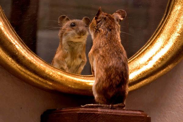 Veritas vincit lo specchio magico - Prendi lo specchio magico ...
