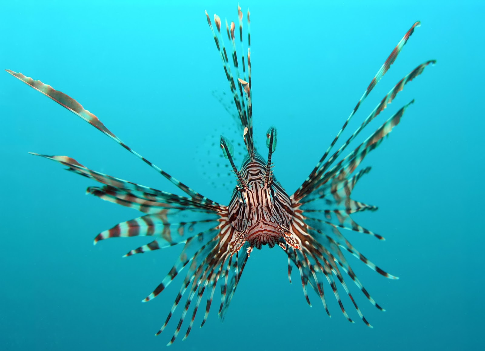 17 Most Popular Freshwater Fish  Fishkeeping World