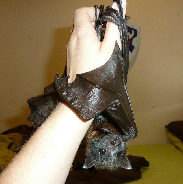 bat, funny animal pictures, animal photos, funny animals