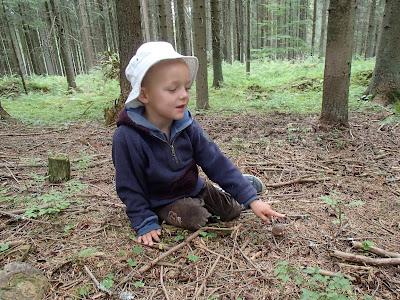 Orawa, Lipnica Wielka, grzybobranie w sierpniu, grzyby sierpniowe, borowik ceglastopory, Boletus luridiformis