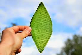 First synthetic biological leaf could allow humans to colonize space
