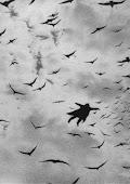 Me gustaría volar como los pájaros