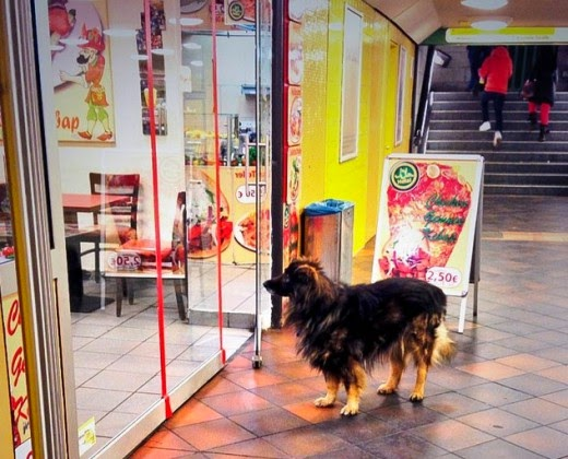 35 Pictures of Dogs Waiting For Their Owners Patiently Outside Shops