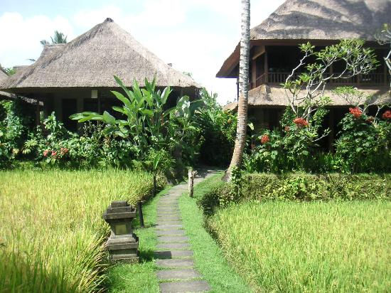 Ubud for Cottage bali