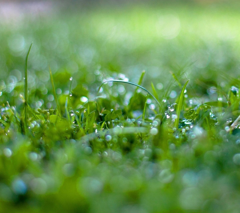 http://3.bp.blogspot.com/-tvlbQUGLc4g/UM-AVonEBVI/AAAAAAAANMQ/3Jeiwa1LEzE/s1600/wet-grass-bokeh-samsung-galaxy-s3-wallpaper.jpg