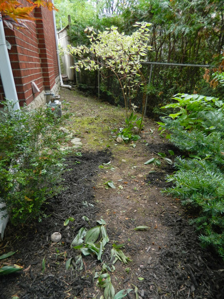 Mount Pleasant West Toronto garden clean up after Paul Jung Gardening Services