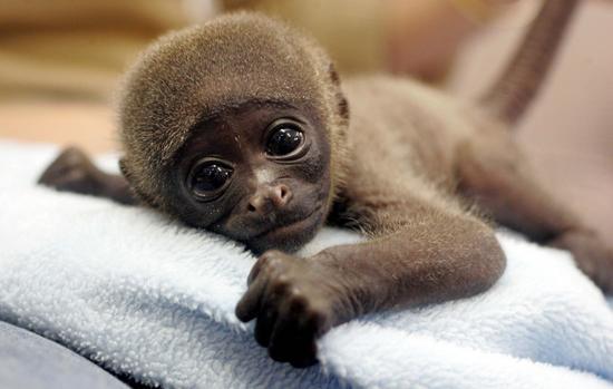 Maymunlar Neden Muzu çok Sever Deneme Blogu