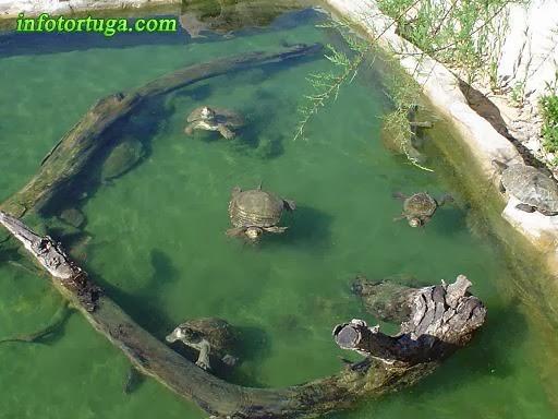 Un zoo en casa instalaciones para tortugas acu ticas for Estanque prefabricado tortugas