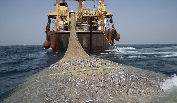 Mentri Kelautan : Ada Illegal Fishing Babak Baru
