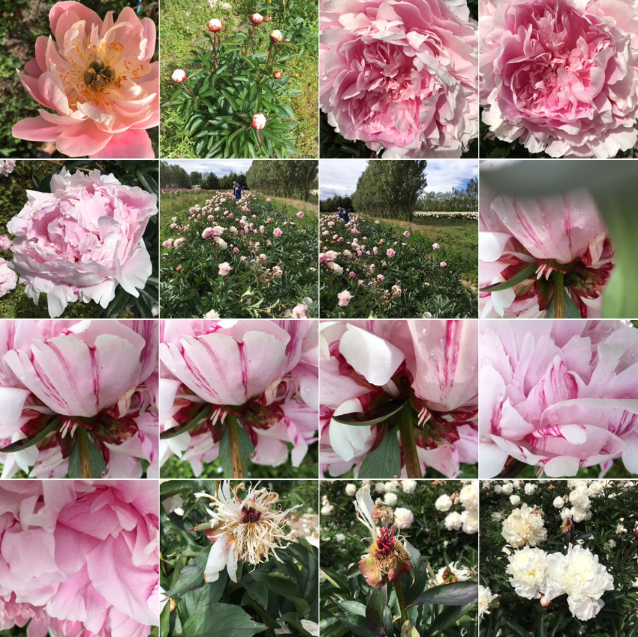 bloom there were you were born Bloom there where you were born сочинение реклама попроси больше объяснений.