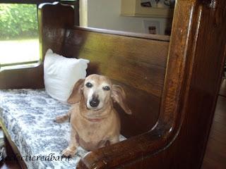 Marina sitting next on church pew, doxie, dachshund