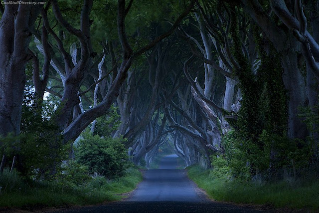 8. Dark Hedges, Northern Ireland, UK - by Jim Zuckerman