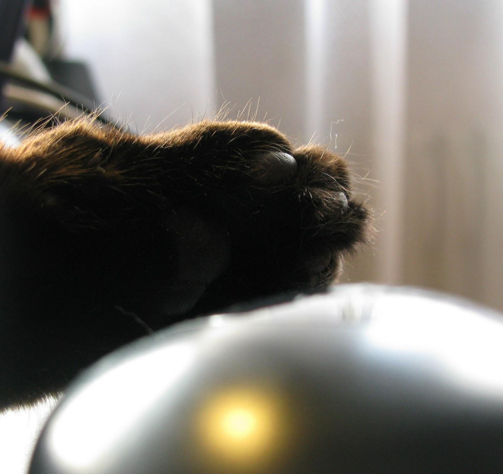Cat\'s Draht: Dezember 2011