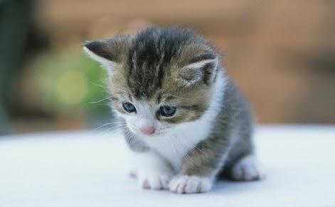 Inilah Alasan Mengapa Kucing Selalu Berisik Ketika Kawin