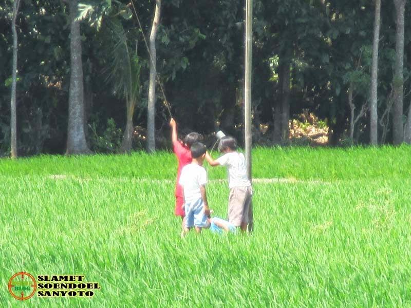 Anak Desa Bermain Di Sawah