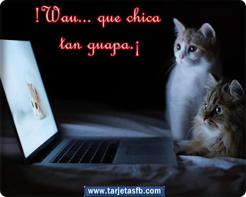 Imagenes de gatos chistosos con frases - Imagui