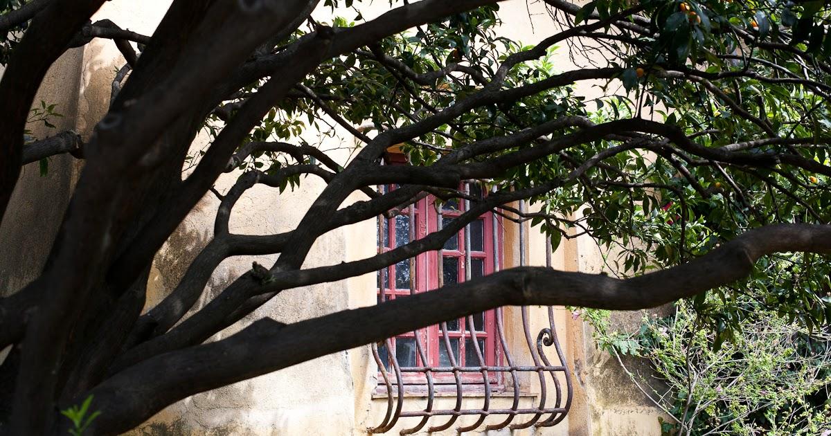 Menton daily photo jardin botanique exotique du val rahmeh for Au jardin du gouverneur