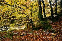 Irati, donde vive el otoño